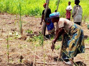 Mozambico Zambezia agricoltura sostenibile