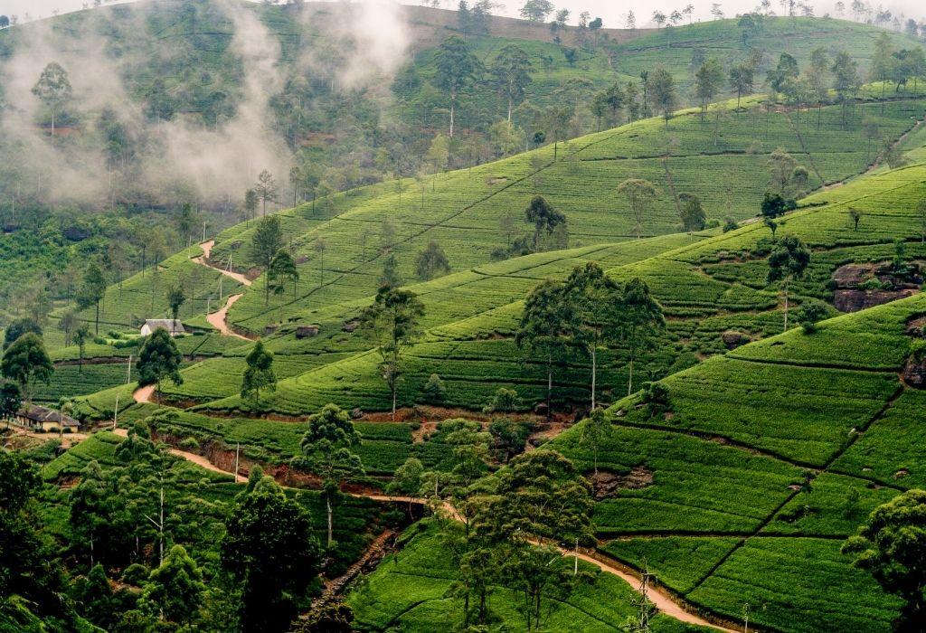 Agricoltura biologica in Sri Lanka